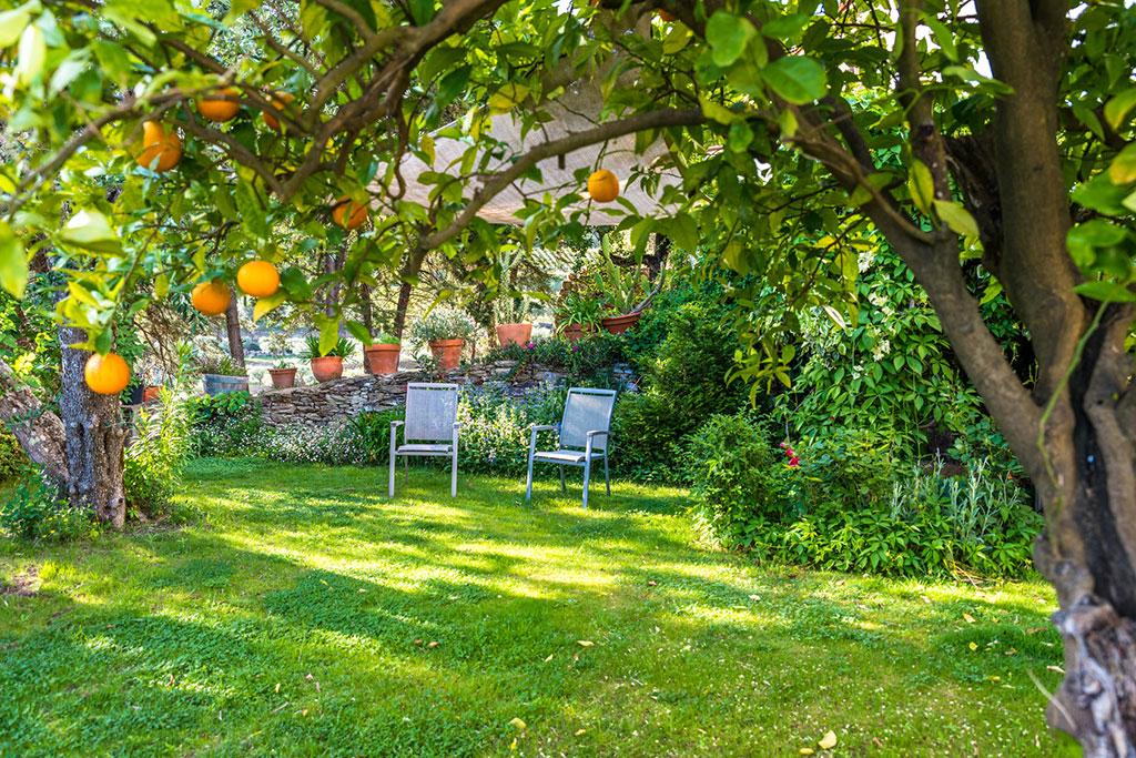 drzewa owocowe we w asnym ogrodzie co warto wiedzie przed za o eniem sadu. Black Bedroom Furniture Sets. Home Design Ideas